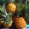 ELIXIR Ananas Créole à base de rhum 500 ml 37°